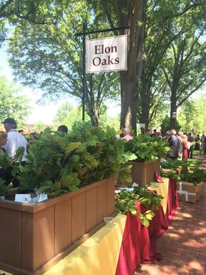 The table of oak saplings for Elon's graduates to plant in their post-grad life.