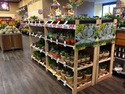 Succulents for sale at the Safeway grocery store in Georgetown.