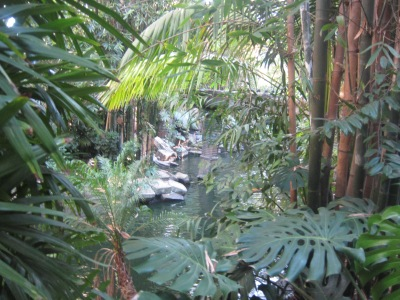 An overlook of the Jungle Cruise in Disneyland's Adventureland.