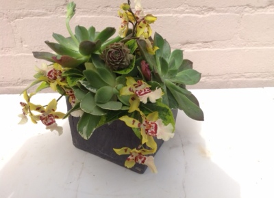 An indoor arrangement of succulents, perfect for home decor.